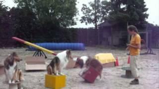Hunde12 Tdot Welpen Film.wmv