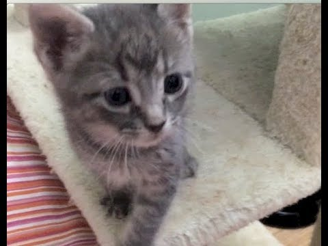 Cricket Getting A New Momma Cat & Kittens Eyesight Is Improving - #18 - Kitten Disabilities