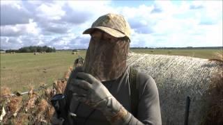 Охота на дикого голубя в Лен обл(, 2015-09-06T19:48:12.000Z)