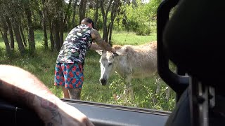 Mat Best SEDUCES ancient donkey (GONE WILD)(CRAZY)