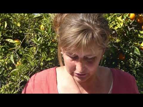 Siedler IV - Blasrohrschützenиз YouTube · Длительность: 4 мин27 с
