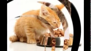 сколько давать сухого корма кошке