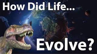 Evolution Of Life On Planet Earth