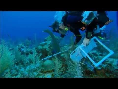 Volunteer Abroad:Marine Conservation in Jamaica