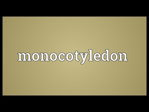 Monocotyledon Meaning