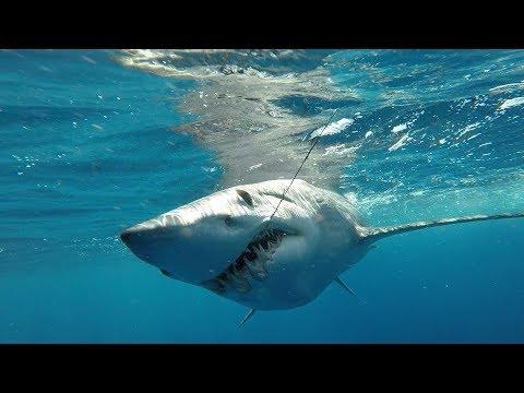 IFISH Monster Mako Sharks