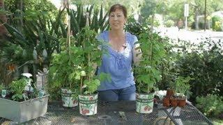 How to Transplant Raspberries With Space in Between : Garden Space