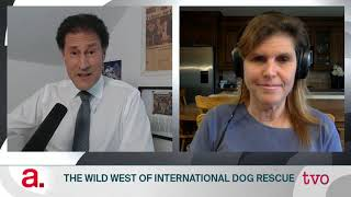 The Wild West of International Dog Rescue