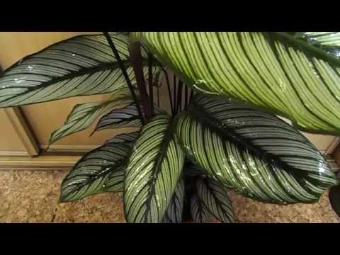 """Роза """" Рэд Париж"""". """"Нескучный сад Новоуральск""""из YouTube · С высокой четкостью · Длительность: 2 мин17 с  · Просмотров: 269 · отправлено: 13.09.2012 · кем отправлено: нескучный сад новоуральск"""