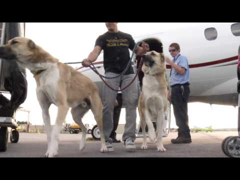 Family dogs denied on airline, Wrigley heiress lends private jet