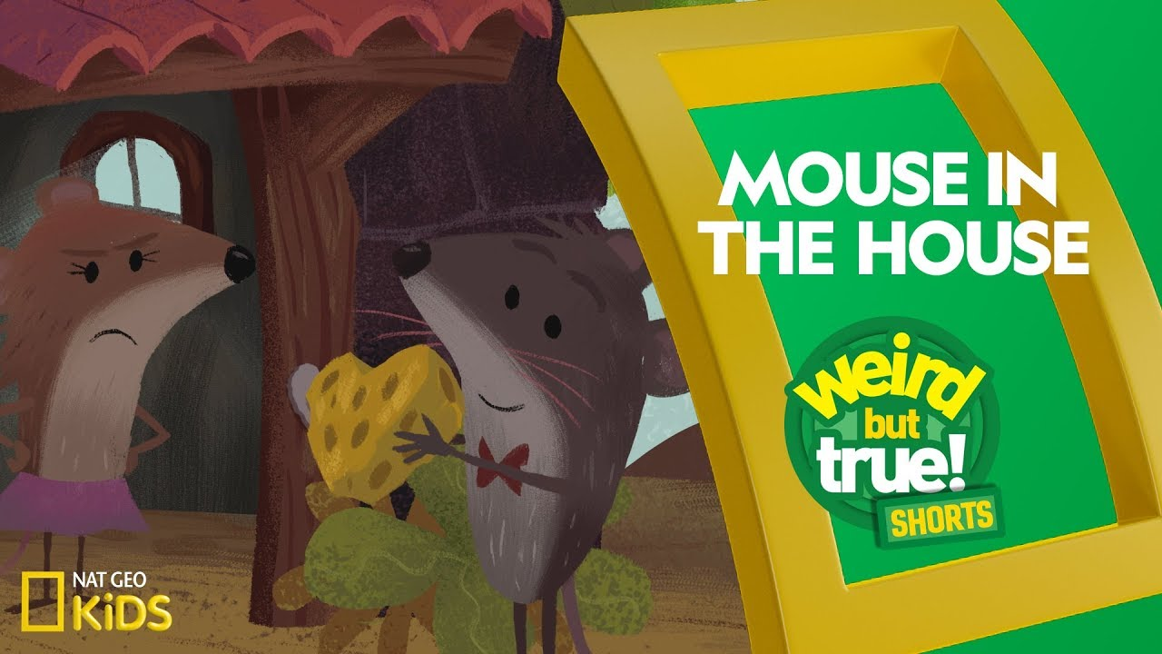 Mouse in the House | Weird But True! Shorts