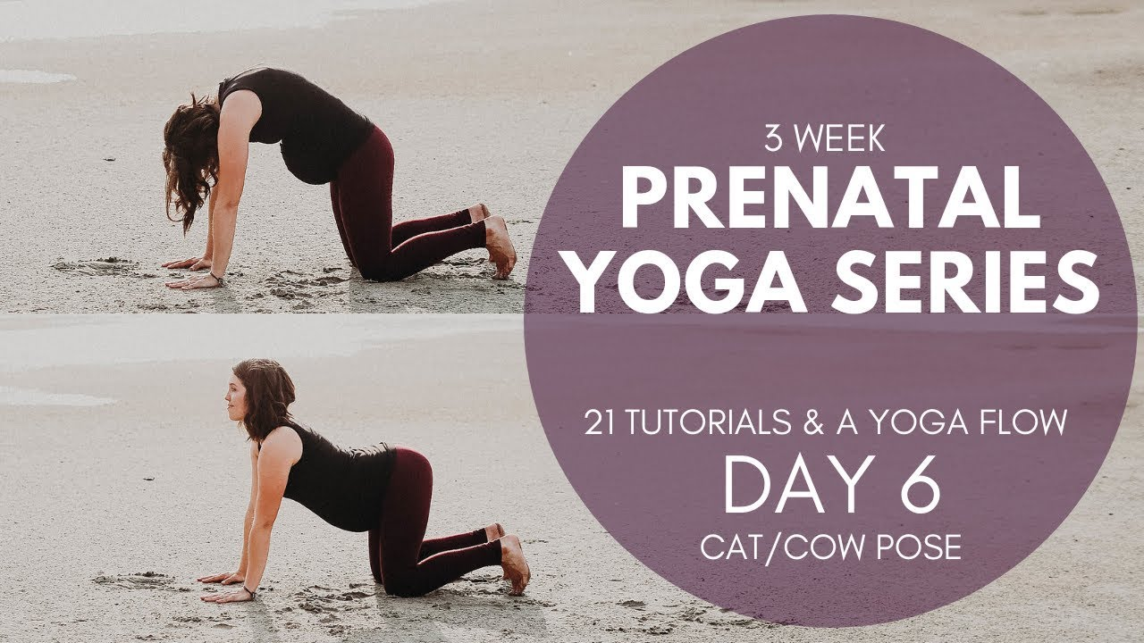 Prenatal Yoga Series Day 6 Of 22 Cat Cow Pose Yoga For Pregnancy Youtube