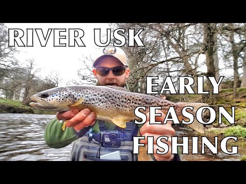 River Usk Fly Fishing - Dry Fly, Nymphs & Spider Techniques For Wild Brown Trout Part 1