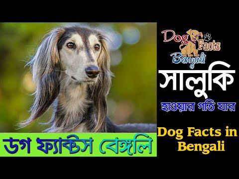 Saluki dog facts in Bengali | Fastest Dog | Dog Facts Bangla