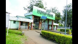 Auctioneers raid Mumias Sugar Company, carry away property
