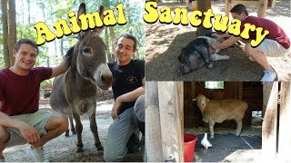 Why Animal Sanctuaries are BETTER than Zoos...