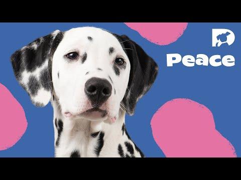 DOGTV Relaxation: Sample Episode [Full HD]