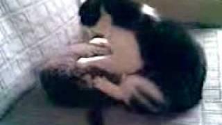 Кот и подушка