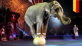 Un éléphant s