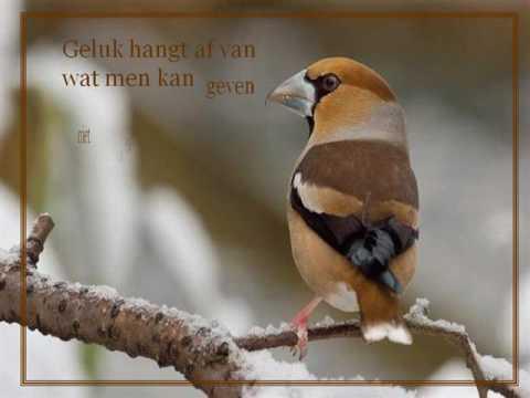 spreuken met vogels Vogels met Spreuken   YouTube spreuken met vogels