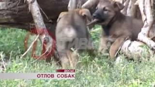 Отлов бродячих собак в Улан-Удэ