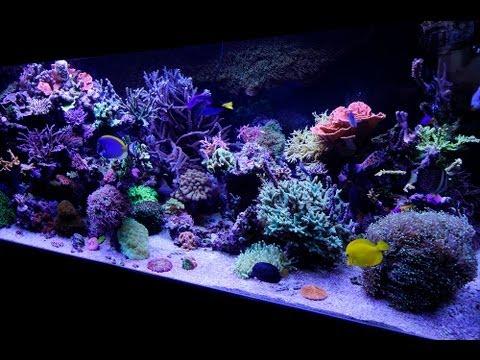 Zakładanie akwarium morskiego cz.1 - niezbędny sprzęt i ...