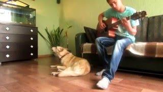 Собака поет. Музыкальные собаки