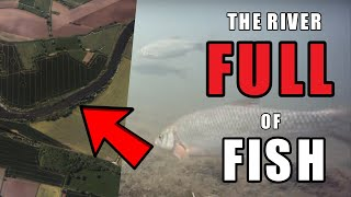 The river that's FULL of FISH - Summer River Fishing