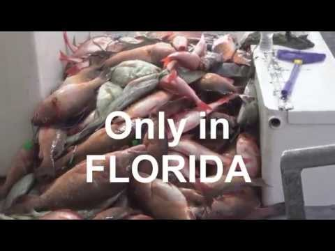 39 Hour Long Range Deep Sea Fishing Trip 11/6/15 | http://www.HubbardsMarina.com