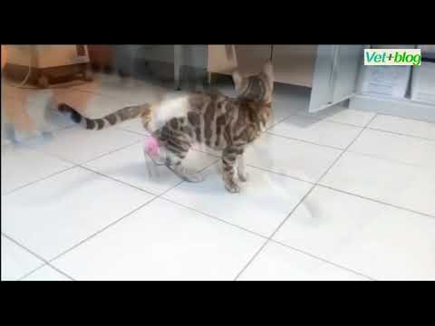 Спасение кошки после перелома позвоночника...