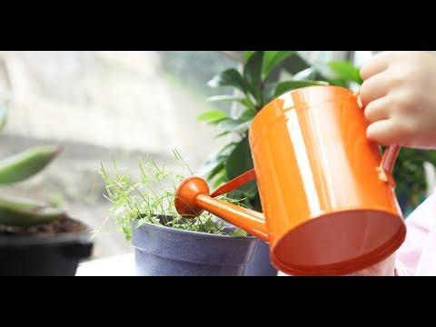 2 СУПЕР ПОДКОРМКИ/Комнатные цветы будут расти как на дрожжахиз YouTube · Длительность: 2 мин53 с