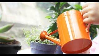 2 СУПЕР ПОДКОРМКИ/Комнатные цветы будут расти как на дрожжах