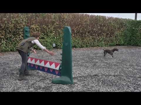 Jump Training for a German Shorthaired Pointer