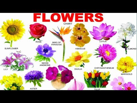 Learn Flowers Name With Picture In English For Kids |
