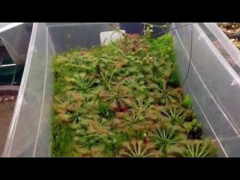 Equilibrio Carnivorous Plants Carnivorous Plants Cacti