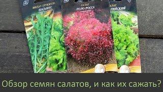 Обзор семян салатов, и как их сажать?