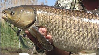 Рыбалка на карпа и амура 2018.Открытие на Кубке Удачи.Марьевское водохранилище