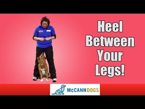 How To Teach Your Dog To Walk Between Your Legs