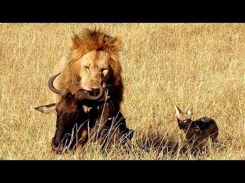 Kenya: Masai Mara Part 2