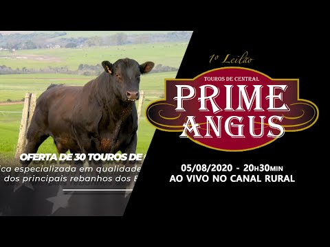 VT PRIME ANGUS -05/08/2020 CANAL RURAL 15s