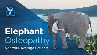 Elephant Osteopathy - not your average patient unless you're Tony Nevin,  world renowned osteopath