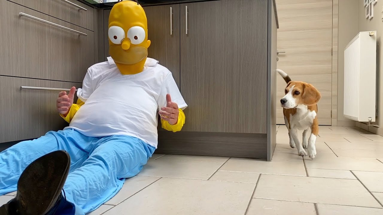 Dogs vs Homer Simpson Prank! Funny Dog Louie & Marie