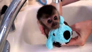 baby monkey bath cutest video ever