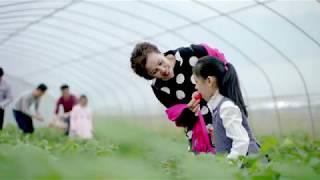 【AETOF】草莓小镇--阜阳市颍泉区闻集镇Strawberry town - Fuyang City Ying Quan District Wen town