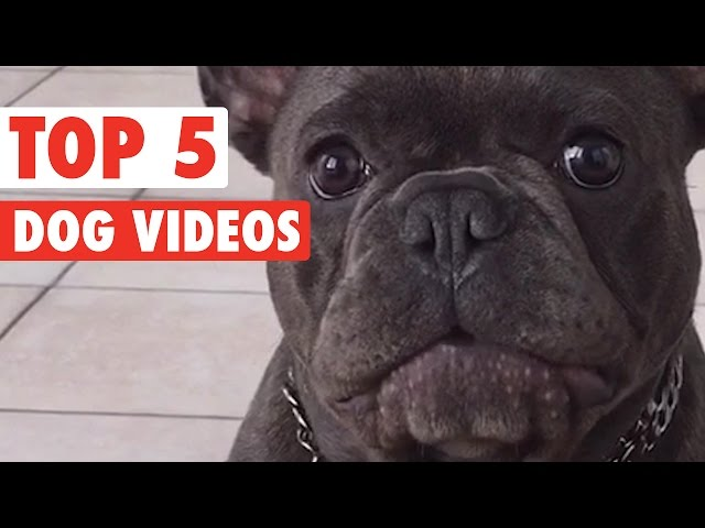 Best of the Week Dogs Compilation || March 11 2016
