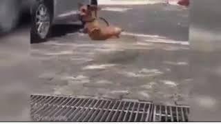 Cười bể bụng với dog