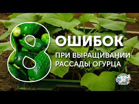 Вопрос: Как самому вырастить хорошую огуречную рассаду?