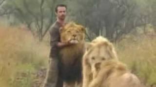 Kevin Richardson speelt met leeuwen