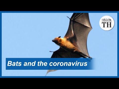 Bats And The Novel Coronavirus