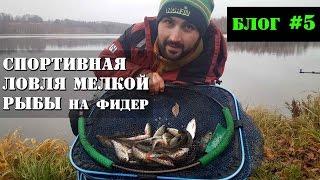 Озерная ловля плотвы и окуня на фидер в ноябре. Рыбалка с Олегом Квициния : Vlog #5